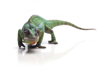 Chameleon, does your web strategy adapt to your market environment?